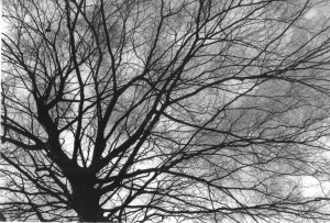 Image tree1 - Copy - Copy
