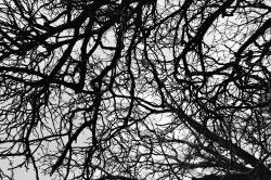 treescapesl5-250x166