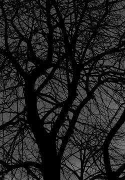 treescapesp1-250x360